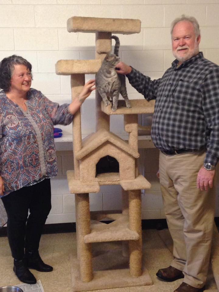 New cat tower 2016