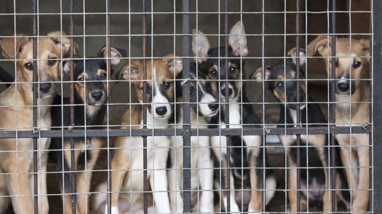 Puppies-locked-in-the-cage crop1