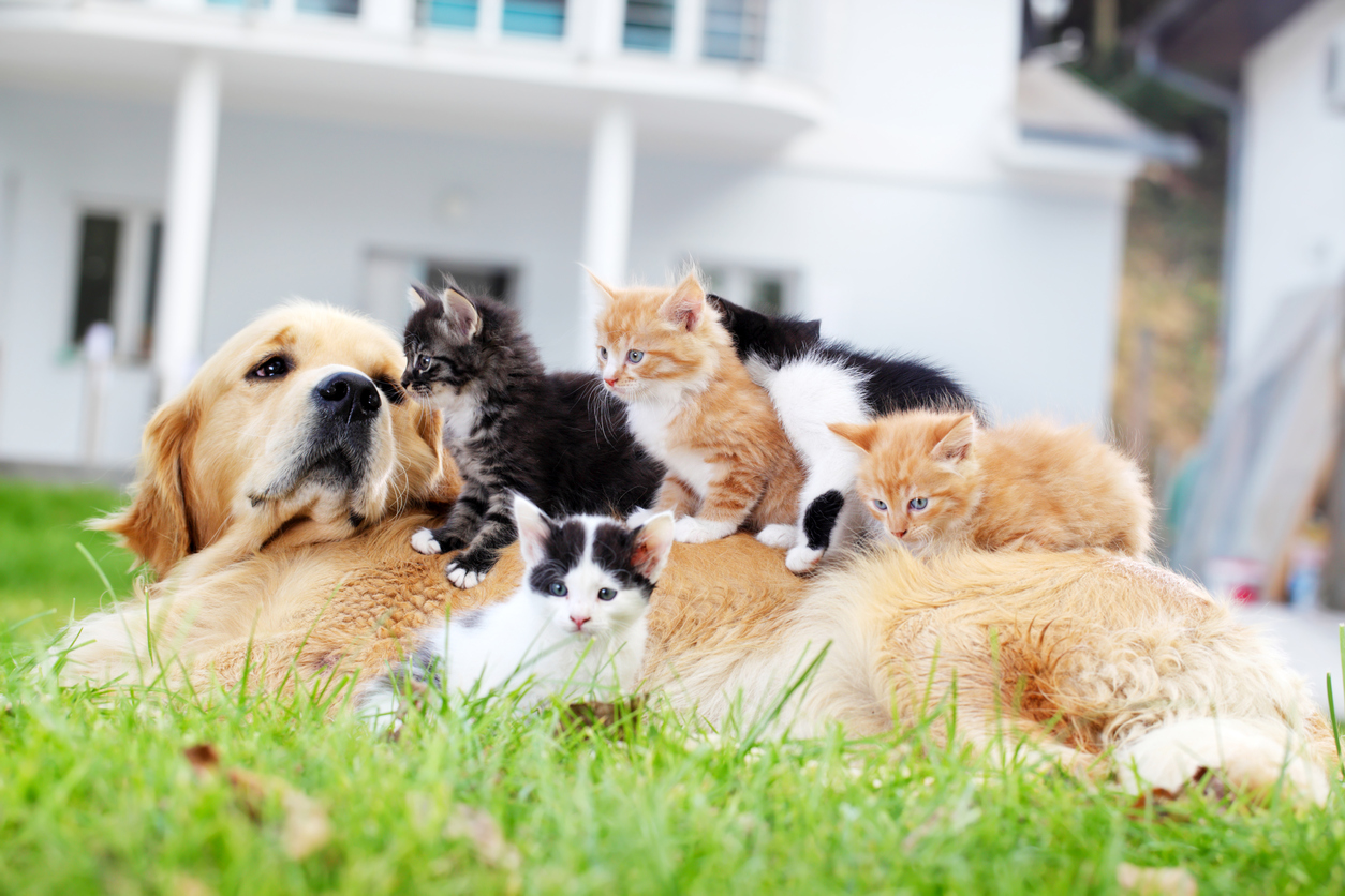 Dog and little cats together. They are enjoying on the green grass.