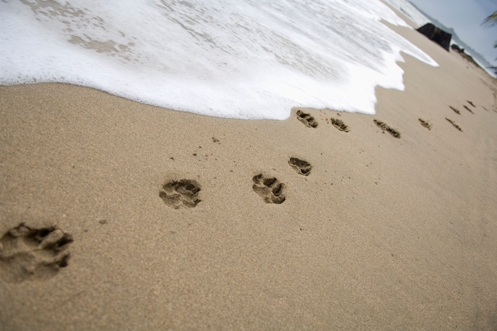 dog footmarks on a beach