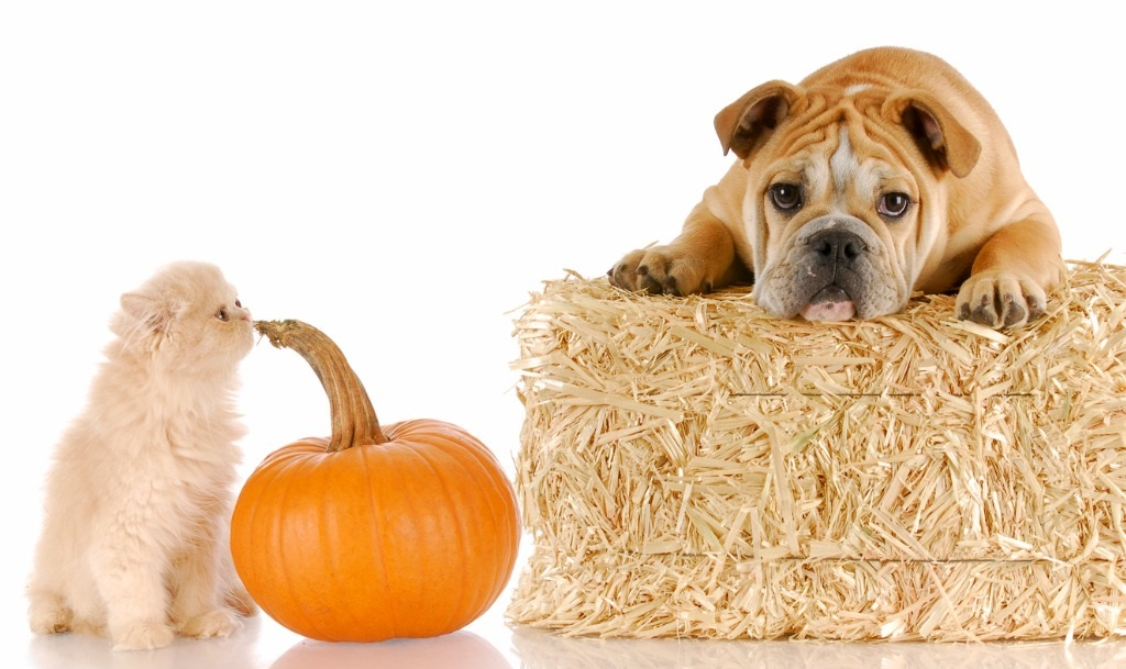 halloween-puppy-and-kitten-picture-id153775905